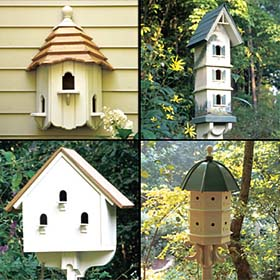 For the Birds - Project Plan 502047